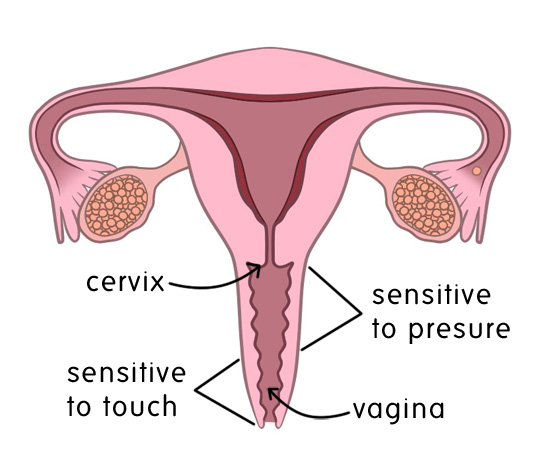 vagina with touch and pressure sensitivities labelled