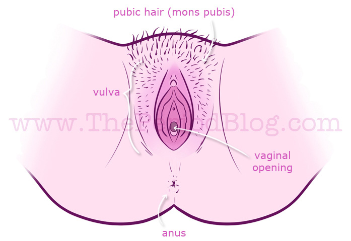 Tips on finding the vaginal hole